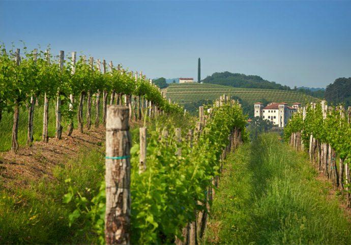vinogradi-img-1