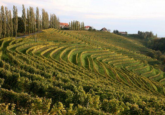 vinogradi-img-3